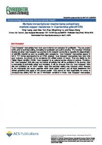 Multiple Transcriptional Mechanisms Collectively Mediate Copper